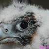 curso halcones