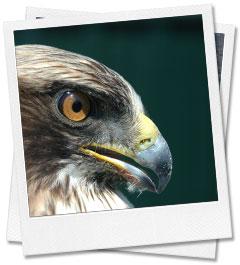 Icarus, estudios medioambientales